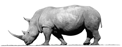 prodent-mailee-rhino-2020-425px